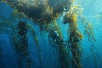 Global experts to put the spotlight on seaweed
