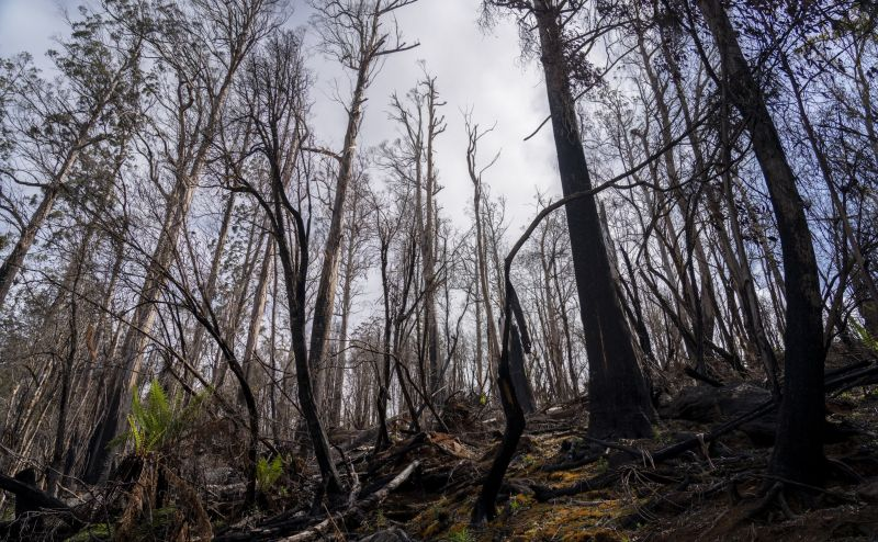 Study warns logging makes fires worse